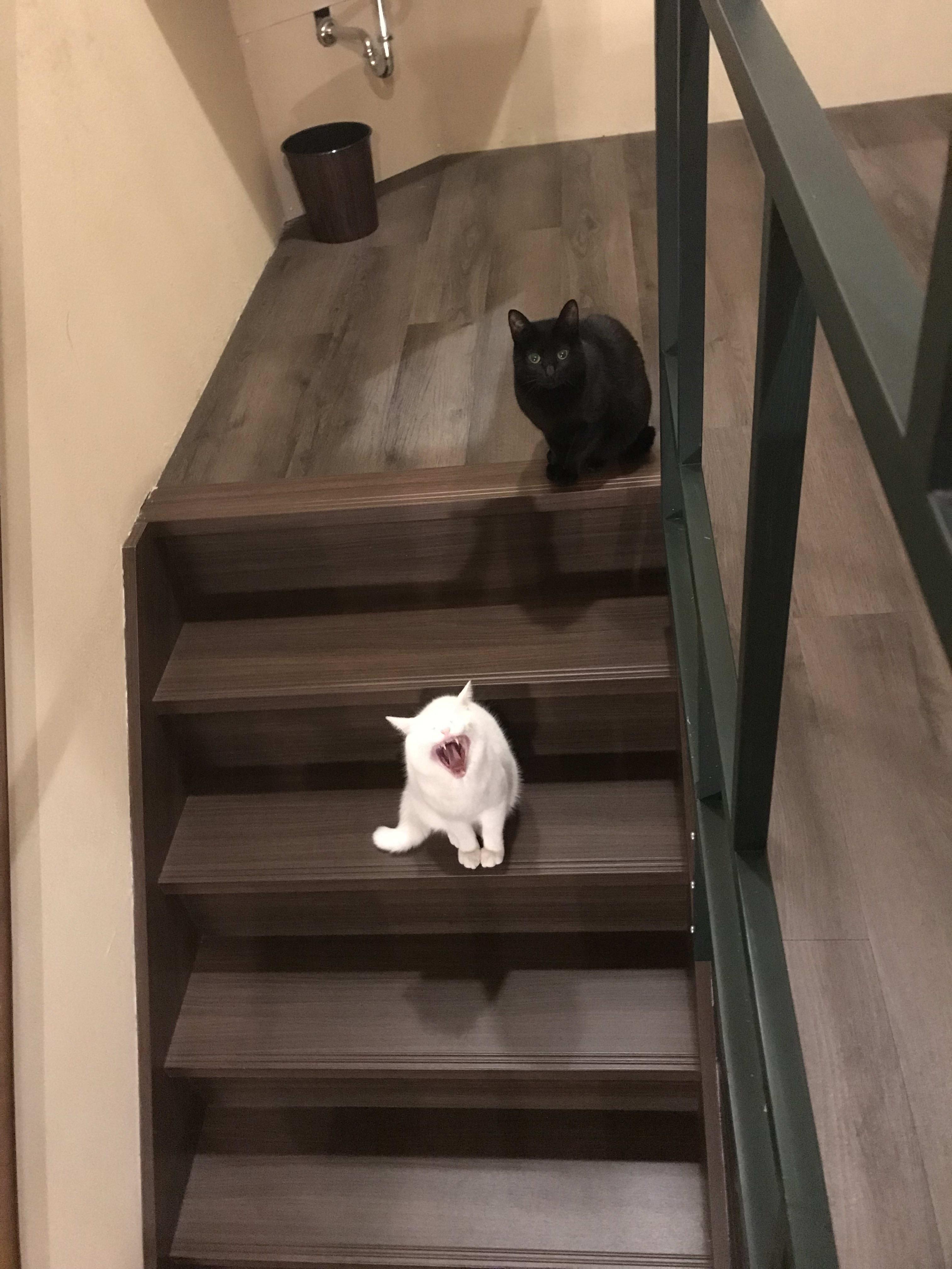 HOSTEL - Mad Cat Hostel Osaka & Bar