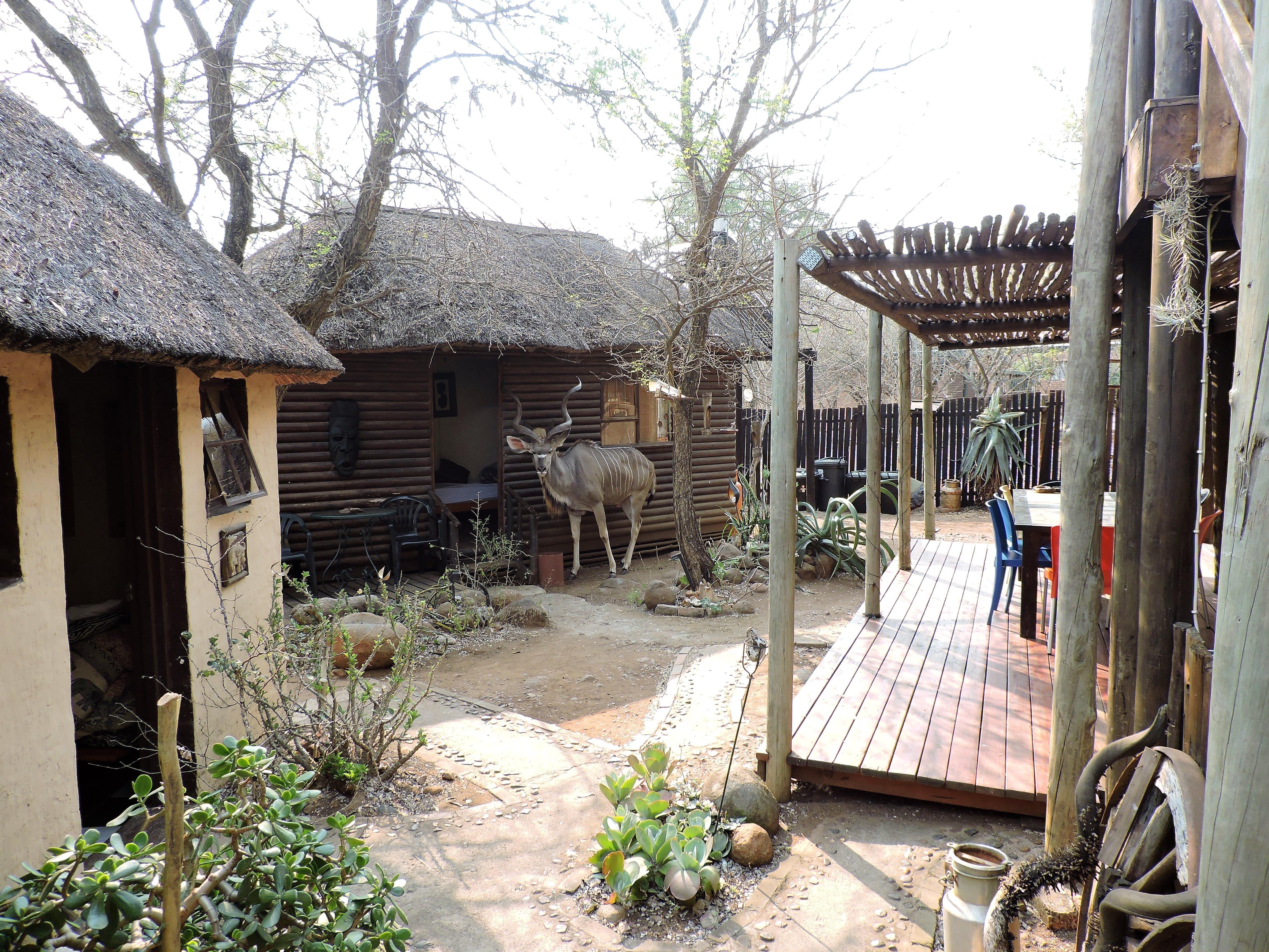Kruger Inn Backpackers