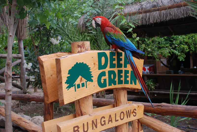 Deep Green Bungalows