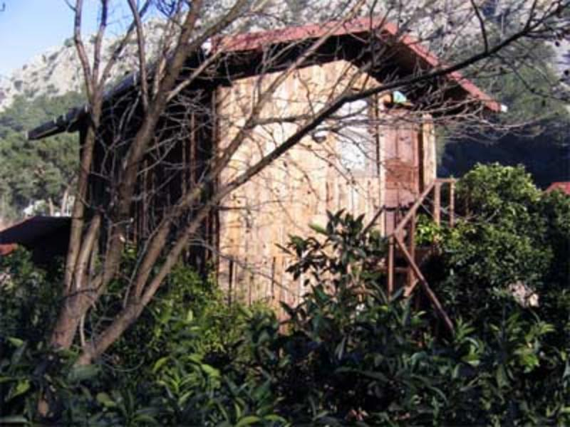 Bayrams Treehouse