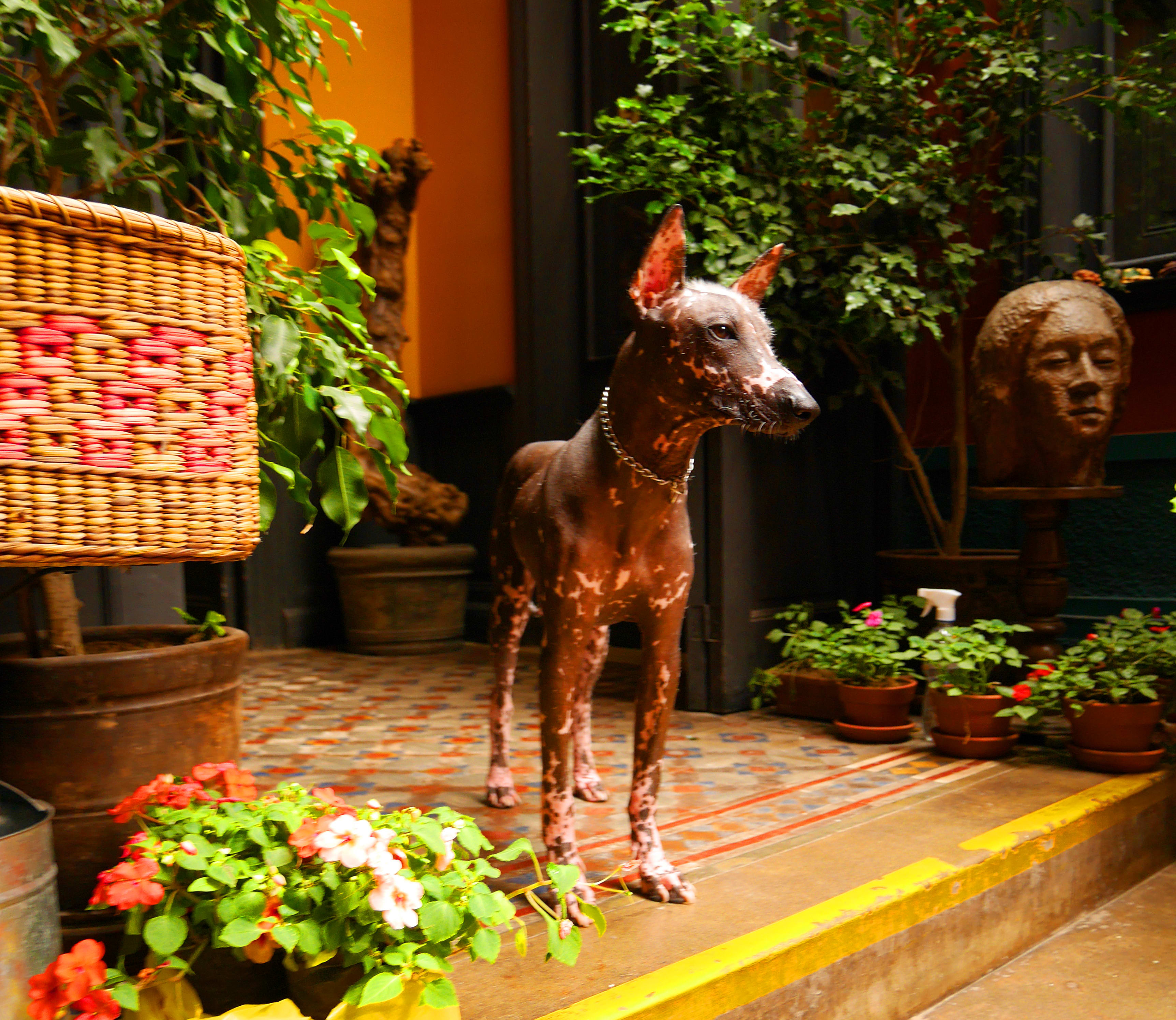 HOSTEL - KACLLA, The Healing Dog Hostel