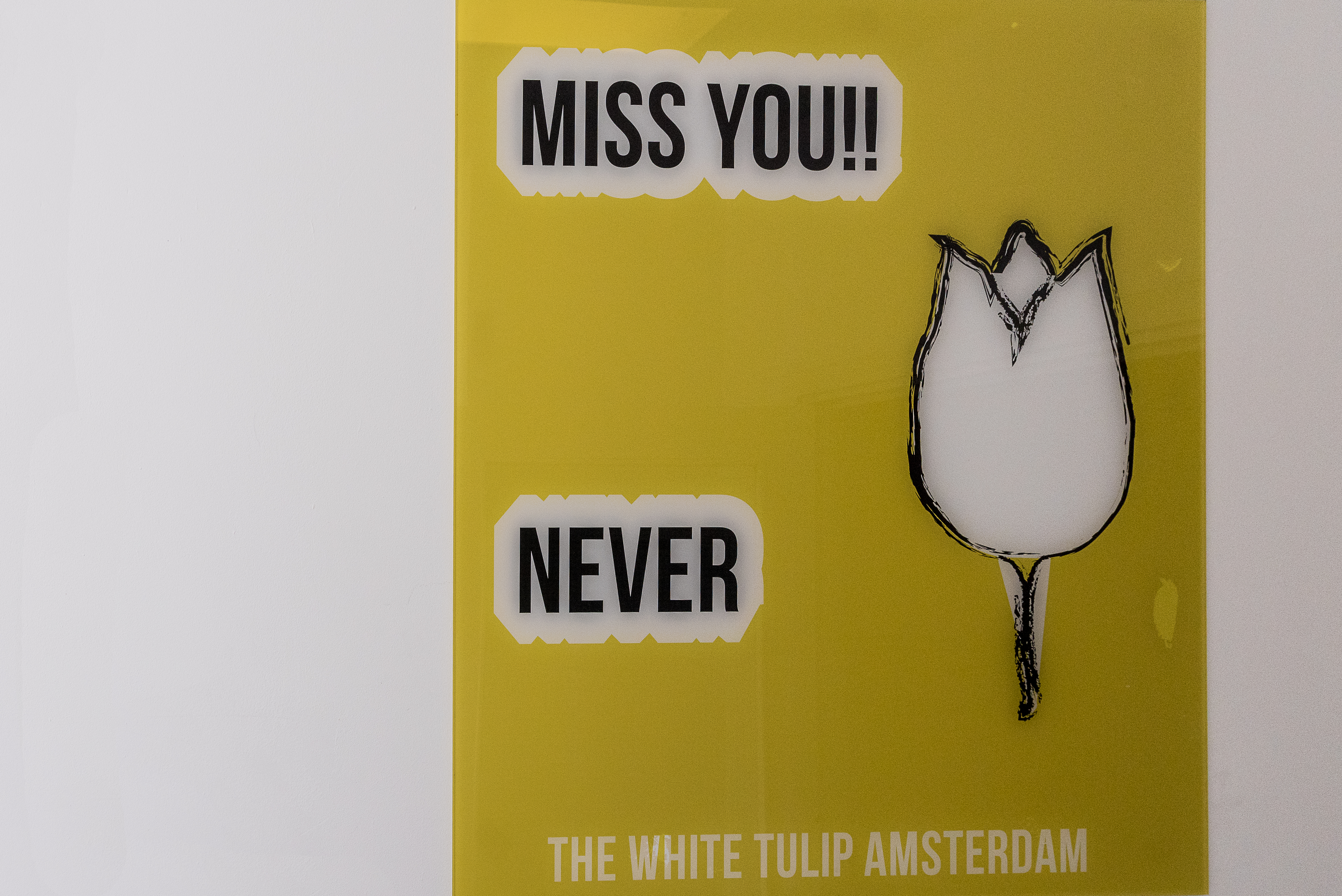 The White Tulip Hostel