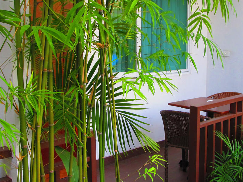 Billabong Hostel Phnom Penh