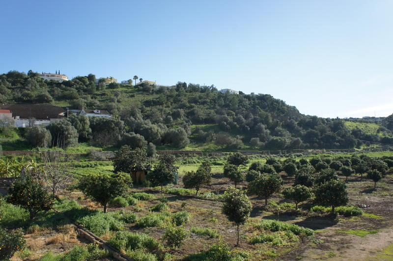 Horta Grande