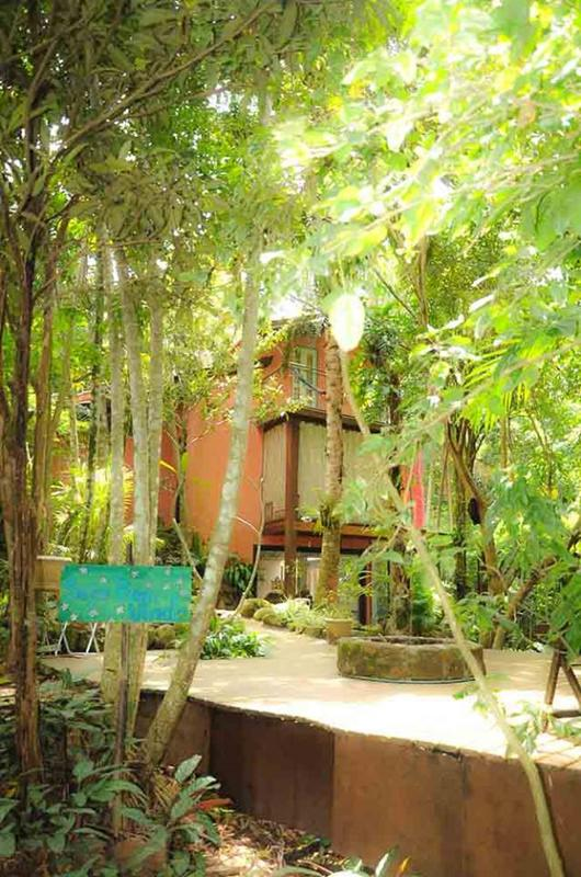 Bambu Floripa
