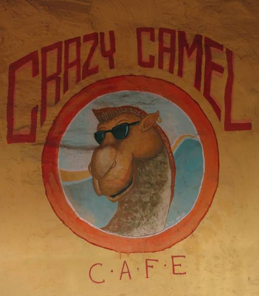 Crazy Camel Guest House