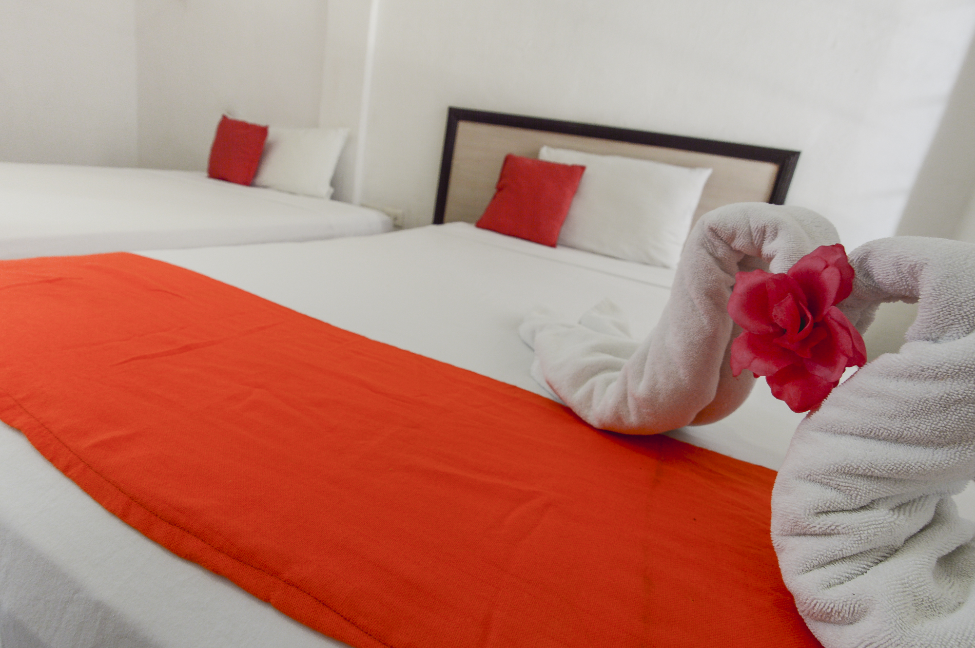 Balu Hostel. Isla Mujeres