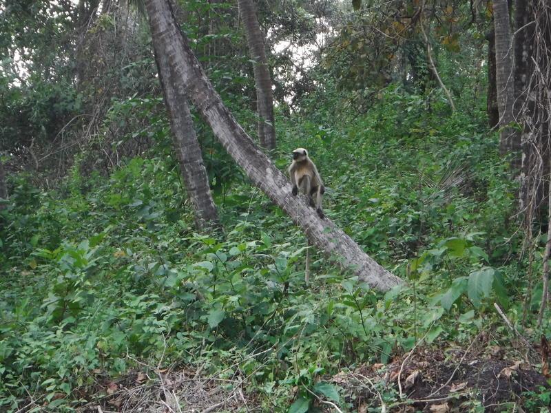 Credo Jungle Resort - Agonda