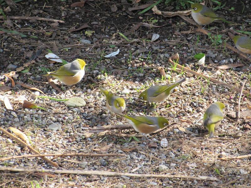 Birdsong Backpackers