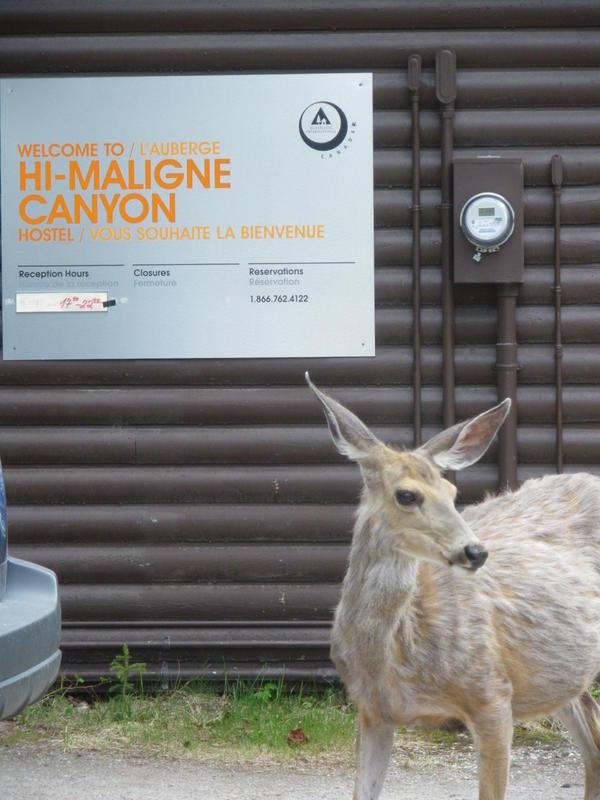 HI Maligne Canyon