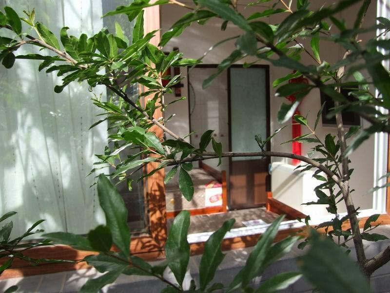 Courtyard View Hostel