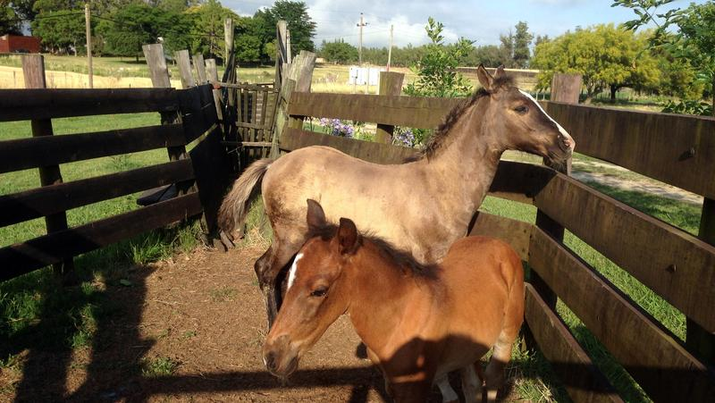 El Galope Horse Farm