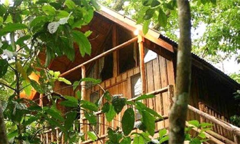 Bayrams Treehouse