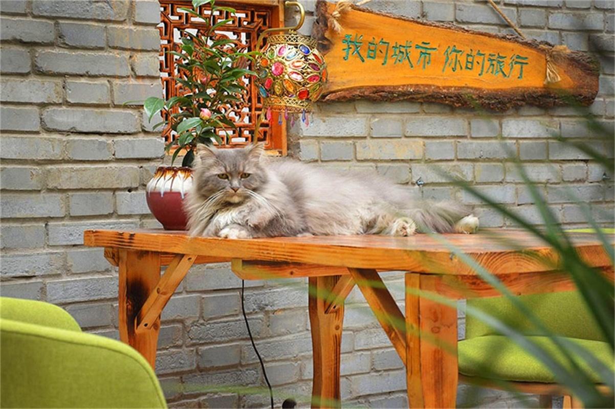 Luoyang Longmen International Youth Hostel