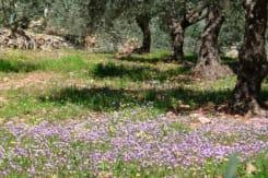 Kibbutz Moran Country Lodging