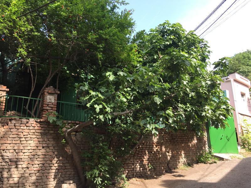 HOSTEL - Green House Hostel Tbilisi