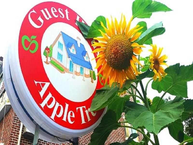 Apple Tree Guesthouse