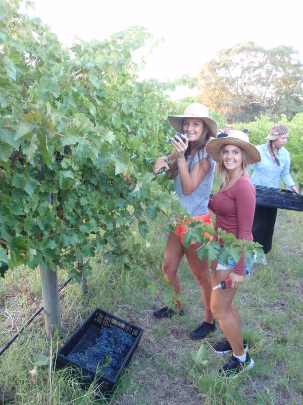 Mclaren Vale Backpackers
