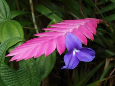 Fotografias de Cabañas Armonia y Jardín de Orquídeas