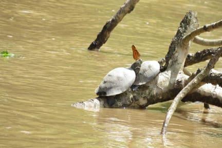 Billeder af Tambopata  Yacumama Ecolodge