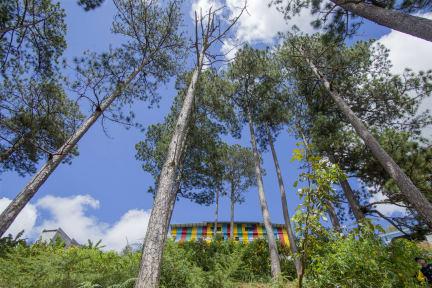 Photos of iColor Dalat Hostel