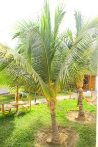 Casa Nomade Mancoraの写真