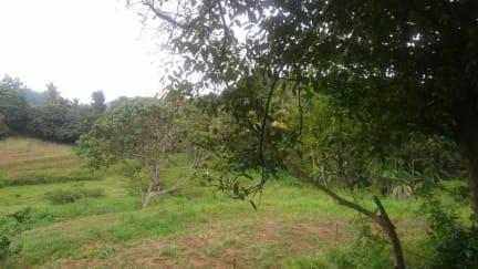 Billeder af Ambanwala Tourist Bungalow