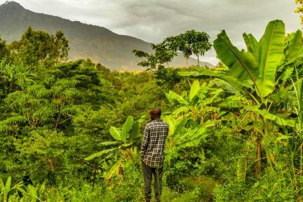 Billeder af Banana Farm Eco Hostel