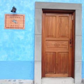 Fotos de Iguana Azul