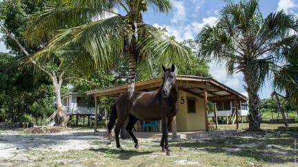 Fotos von Backpackers Paradise Tropical Horse Farm