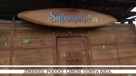 Фотографии Salamandra Costa Rica