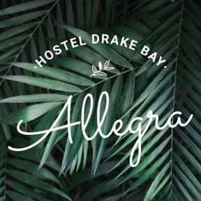 Allegra Hostel照片