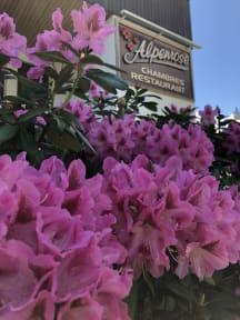Alpenroseの写真