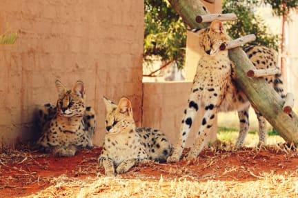 Foton av Zanchieta Lodge & Wild Cat Farm