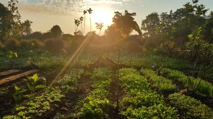Aum Hum Homestay and Organic Farmの写真