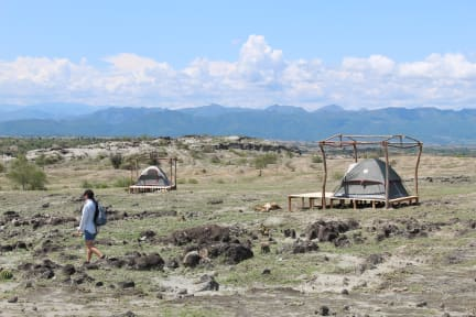 Pachingo의 사진