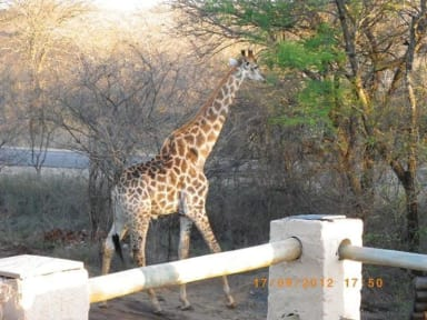 Photos of Kruger Inn Backpackers