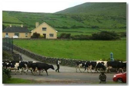 Billeder af Garveys Farm House