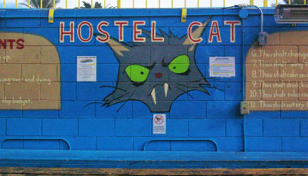 Foton av Hostel Cat