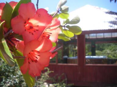 Fotografias de Sunseeker Lodge