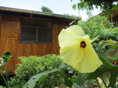 Fotos de Gallito de las Rocas Lodge