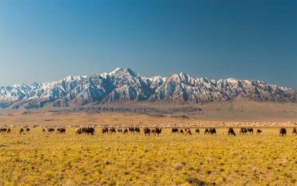 Photos of Sunpath Mongolia