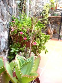 Casa Arbol照片