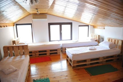 Photos of Eco Hostel Republik