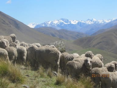 Fotografias de Dunstan Downs High Country Sheep Station