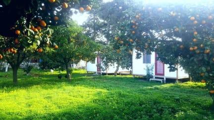 Bodrum Ecofarm Camp & Hostel照片
