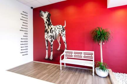 Design Hostel 101 Dalmatinac照片