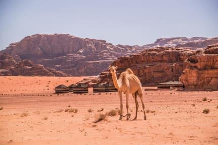 Photos of Bedouin Nomads Adventure