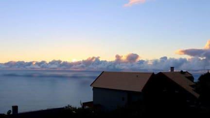 Foto's van Madeira Native Motion