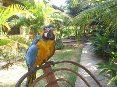 Amazoniaguesthouse照片